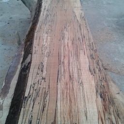 Length of Spalted Beech Timber